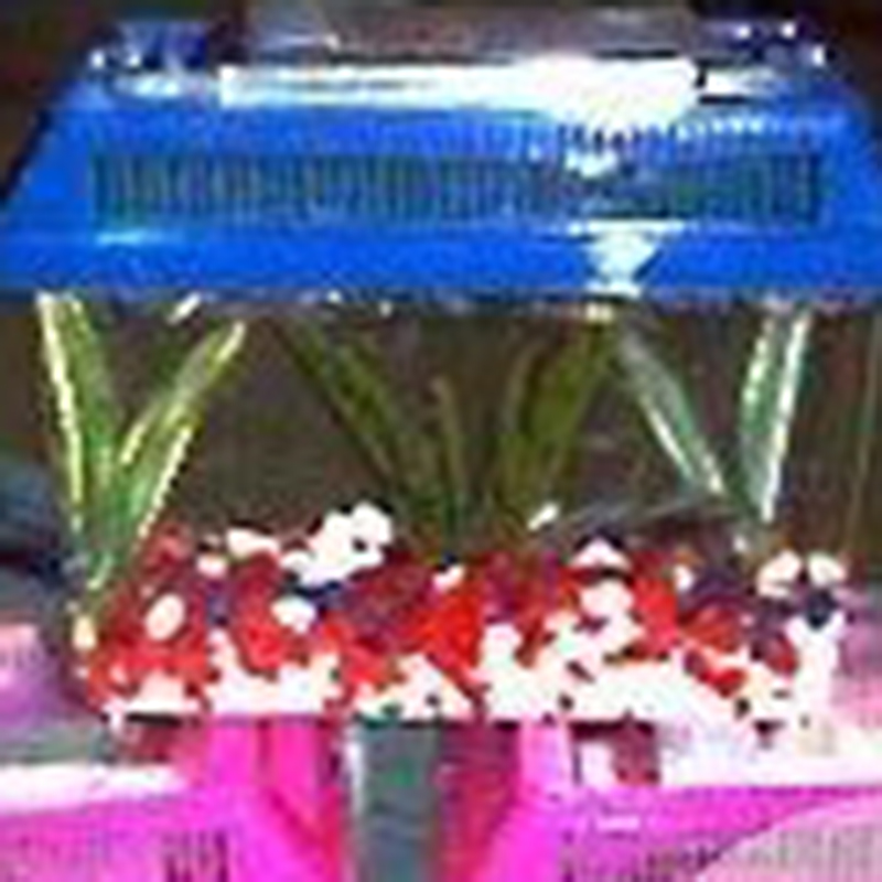 decorate your own fish tank